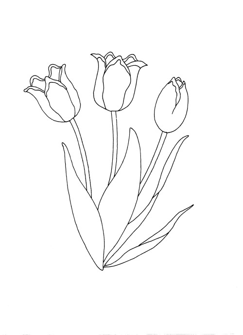 Click to open the drawing of tulips for colouring in.